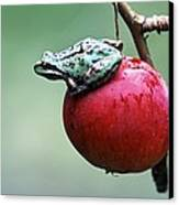 Pacific Tree Frog On A Crab Apple Canvas Print by David Nunuk