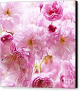 Pink Cherry Blossoms  Canvas Print by Elena Elisseeva