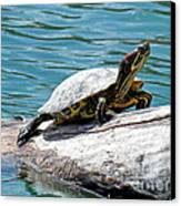 Red Eared Slider Canvas Print by Irfan Gillani