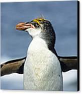 Royal Penguin Macquarie Isl Antarctica Canvas Print by Konrad Wothe