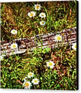 Summer Flowers On The Blue Ridge Parkway 7653 Canvas Print by Dan Carmichael