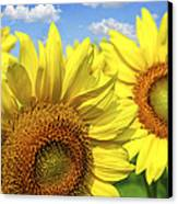 Sunflowers Canvas Print by Elena Elisseeva