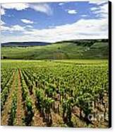 Vineyard Of Cotes De Beaune. Cote D'or. Burgundy. France. Europe Canvas Print by Bernard Jaubert