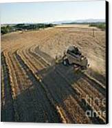 Wheat Harvest In Provence Canvas Print by Sami Sarkis