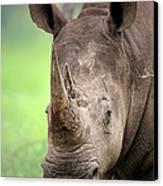White Rhinoceros Canvas Print by Johan Swanepoel