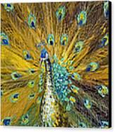 Peacock Canvas Print by Willson Lau
