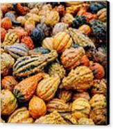 Autumn Gourds Canvas Print by Joann Vitali