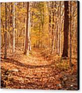 Autumn Trail Canvas Print by Brian Jannsen