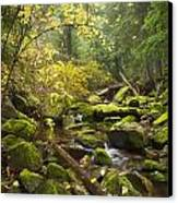 Beauty Creek Canvas Print by Idaho Scenic Images Linda Lantzy