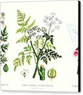 Common Poisonous Plants Canvas Print by English School