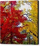 Fall Leaves Canvas Print by Ariane Moshayedi