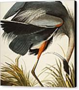 Great Blue Heron Canvas Print by John James Audubon