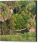 Green Cay Wetlands, Fl Canvas Print by Mark Newman