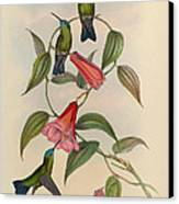 Hummingbirds Canvas Print by Philip Ralley