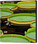 Lilly Pads Canvas Print by Frozen in Time Fine Art Photography