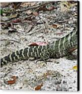 Lizard  Canvas Print by Joyce Woodhouse