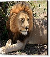Male Lion On The Masai Mara  Canvas Print by Aidan Moran