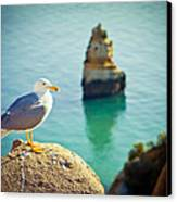 Seagull On The Rock Canvas Print by Raimond Klavins