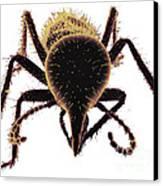 Termite Soldier Canvas Print by David M. Phillips