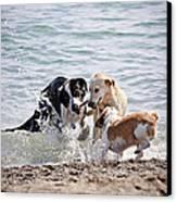 Three Dogs Playing On Beach Canvas Print by Elena Elisseeva