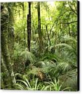 Tropical Jungle Canvas Print by Les Cunliffe
