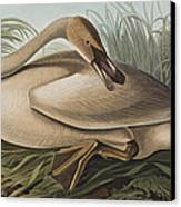 Trumpeter Swan Canvas Print by John James Audubon