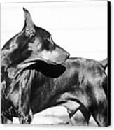 Watchful Canvas Print by Rita Kay Adams