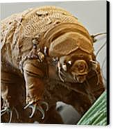 Water Bear Canvas Print by Eye of Science and Science Source