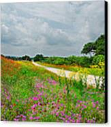 Wildflower Wonderland Canvas Print by Lynn Bauer