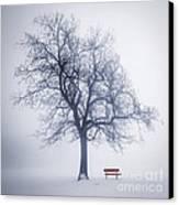 Winter Tree In Fog Canvas Print by Elena Elisseeva