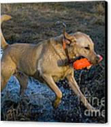 Yellow Labrador Canvas Print by Linda Freshwaters Arndt