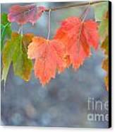 Autumn Leaves Canvas Print by Mariusz Blach