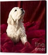 Golden Retriever Puppy Canvas Print by Angel  Tarantella