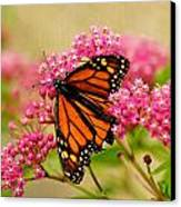 Monarch Butterfly Canvas Print by Carol Toepke