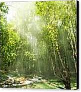 Waterfall In Rainforest Canvas Print by Atiketta Sangasaeng