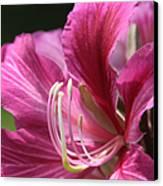 Bauhinia Blakeana - Hong Kong Orchid - Hawaiian Orchid Tree  Canvas Print by Sharon Mau