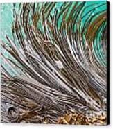 Bull Kelp Blades On Surface Background Texture Canvas Print by Stephan Pietzko