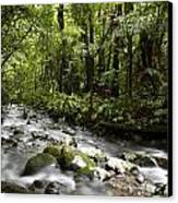 Jungle Stream Canvas Print by Les Cunliffe
