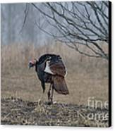 Male Eastern Wild Turkey Canvas Print by Linda Freshwaters Arndt