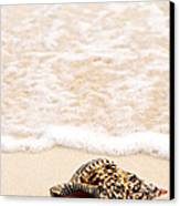 Seashell And Ocean Wave Canvas Print by Elena Elisseeva