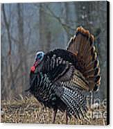 Jake Eastern Wild Turkey Canvas Print by Linda Freshwaters Arndt