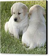 Yellow Labrador Puppy Canvas Print by Linda Freshwaters Arndt