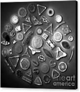 50 Diatom Species Arranged  Canvas Print by Science Source