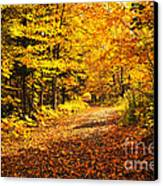 Fall Forest Canvas Print by Elena Elisseeva