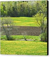 Spring Farm Landscape With Dandelion Bloom In Maine Canvas Print by Keith Webber Jr