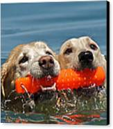 Yellow Labradors Canvas Print by Steven Lapkin