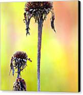 Wilted Flower  Canvas Print by Toppart Sweden