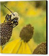 A Bee's Paradise Canvas Print by Jeff Swanson