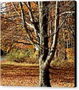 A Fall Tree In New England Canvas Print by Mike McCool