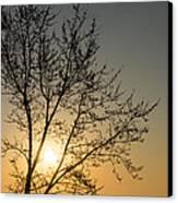 A Filigree Of Branches Framing The Sunrise Canvas Print by Georgia Mizuleva